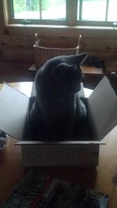Marketing Box, Ollie