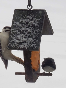 warbler and woodpecker